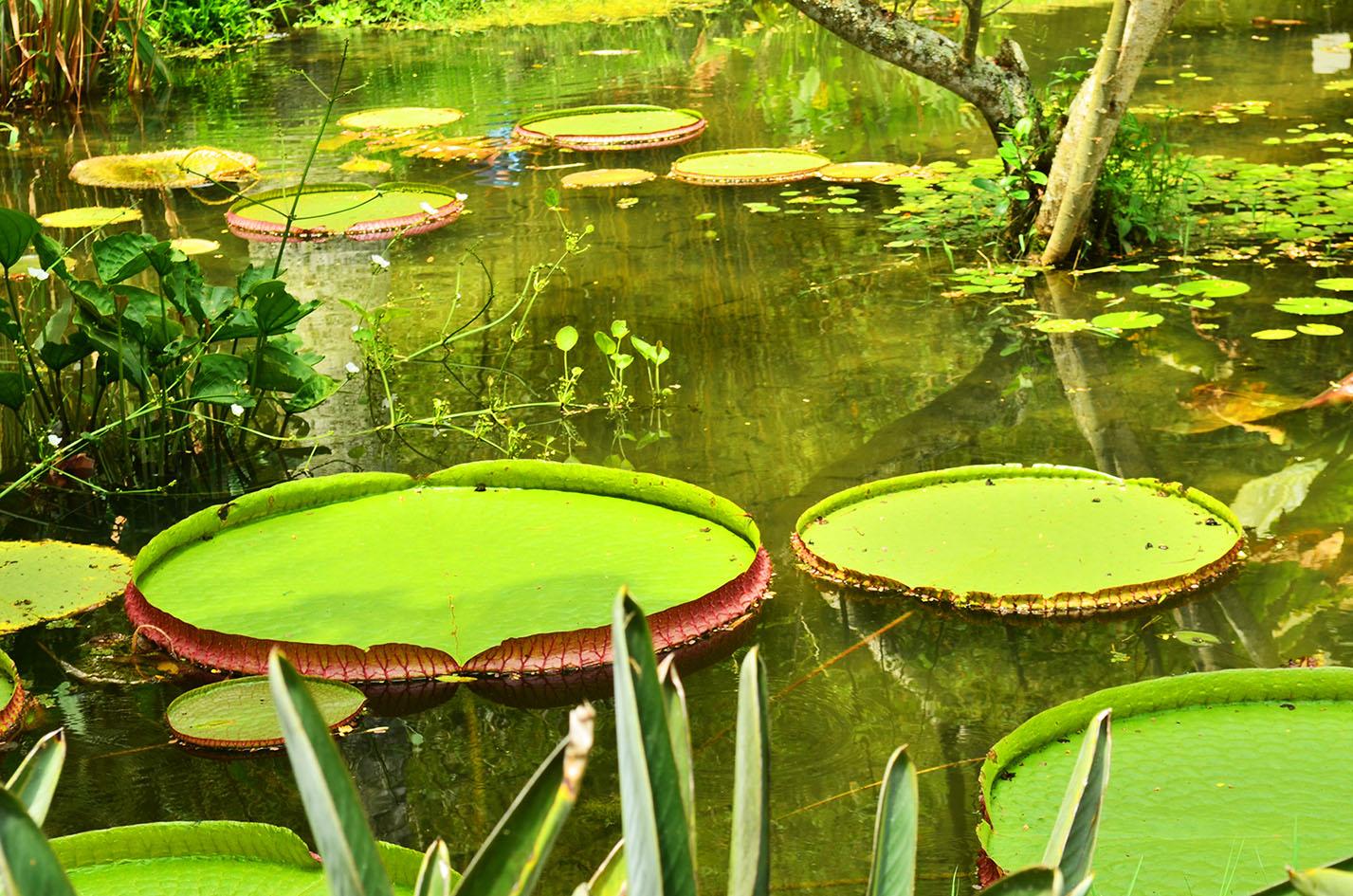 Lugares para visitar no Rio de Janeiro - Jardim Botânico